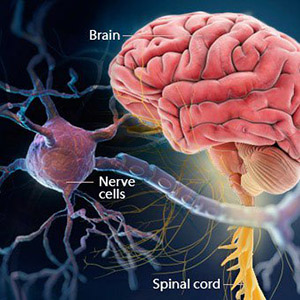 multiple-sclerosis-img