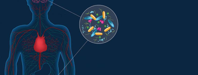 Link between Alzheimer's disease and gut microbiota is confirmed - ارتباط بین باکتری های روده ای و بیماری آلزایمر تایید شد.