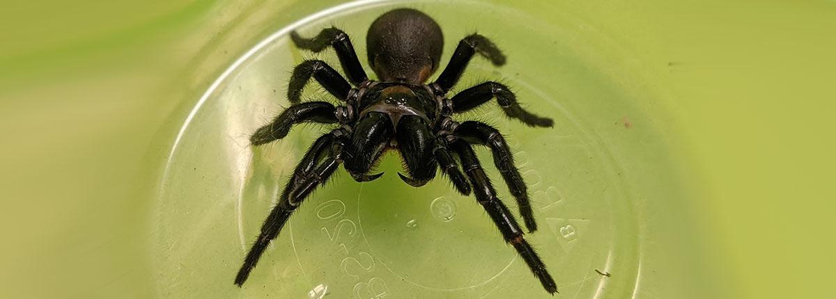 Repairing hearts with deadly spider venom - درمان سکته قلبی با سمی کشنده!